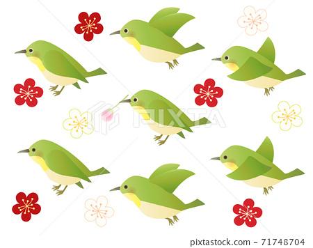 Uguisu Mejiro Tori Set Bird 71748704