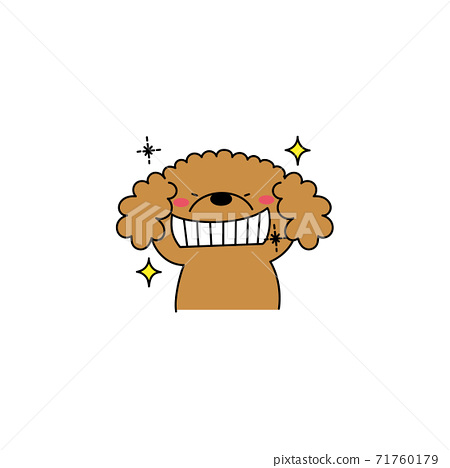 貴賓犬與閃閃發光的牙齒 71760179