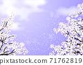 櫻花櫻花Fubuki紫色 71762819