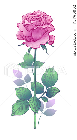Hand drawn Pink  Rose Bud  with Leaves 71769892