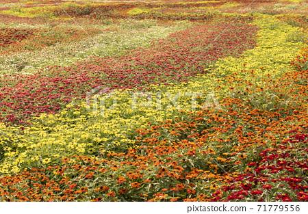 flower garden 71779556