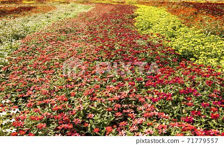꽃밭 71779557