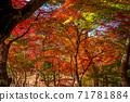 秋天的颜色有马温泉,瑞凤寺公园 71781884