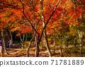 秋天的颜色有马温泉,瑞凤寺公园 71781889