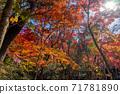 秋天的颜色有马温泉,瑞凤寺公园 71781890