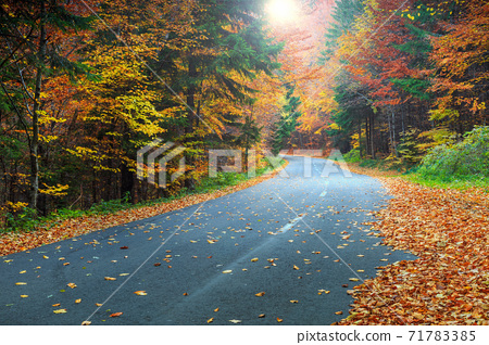 Spectacular romantic road in the autumn colorful forest  71783385