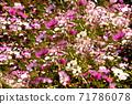 꽃 71786078