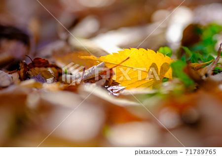 낙엽의 소재 71789765