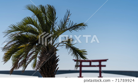 體驗棕櫚樹的熱帶風情 71789924
