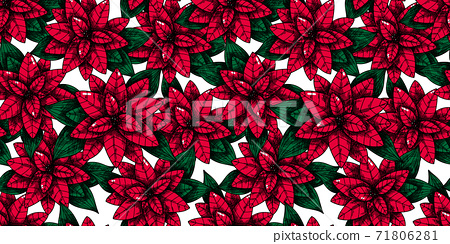 Christmas seamless pattern with plant. Poinsettia. Sketch 71806281