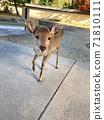 奈良東大寺的小鹿 71810111