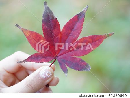 단풍잎을 손으로 잡은 모습을 찍었습니다. 71820640