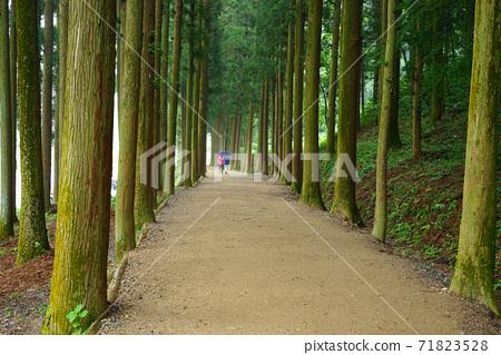 Cedar promenade 71823528