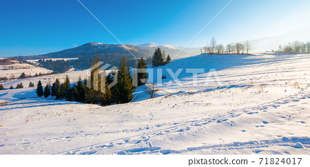 mountainous rural landscape in wintertime. wonderful frosty sunny day. trees on the snow covered hills. 71824017