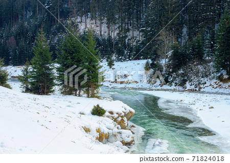 mountain river in winter. spruce forest on snow covered shore. cold sunny morning weather with clouds on the sky 71824018