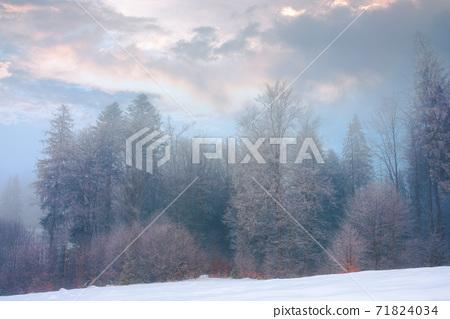 forest on a misty morning. trees in hoarfrost. beautiful winter scenery in foggy weather 71824034