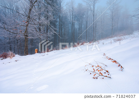 forest on a snow covered slope. trees in hoarfrost. mysterious foggy weather in the morning. beautiful winter scenery 71824037