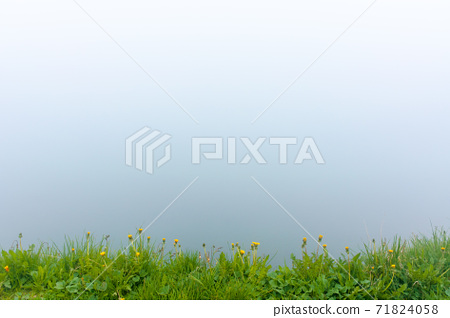 fog on the lake. grassy shore with rocks. overcast sky. mysterious nature. poor visibility concept 71824058