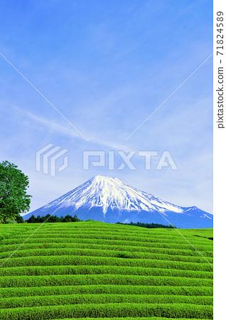 初夏富士山和新鮮的綠茶田 71824589