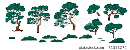 Set of pine trees and bushes 71838272