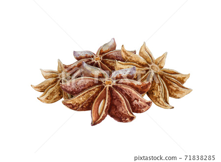 Star anise spice fruits watercolor illustration. 71838285
