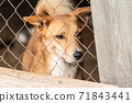 Homeless dog in a shelter for dogs 71843441