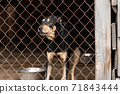 Homeless dog in a shelter for dogs 71843444