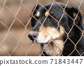 Homeless dog in a shelter for dogs 71843447