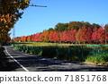 Minamitama山脊主路的11月Inagi 353楓樹秋葉 71851768