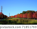 Minamitama山脊主要道路的11月Inagi 352楓樹秋葉 71851769