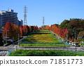 Minamitama山脊主要道路的11月Inagi 348槭樹的秋葉 71851773