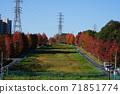 11月Inagi 347 Minamitama山脊主要道路的楓樹秋葉 71851774