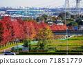 十一月稻城342楓樹,Minamitama山脊主路的秋天的落葉 71851779