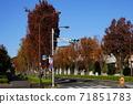 十一月Inagi 338楊樹綠樹成蔭的秋葉/ Wakabadai(無電柱) 71851783