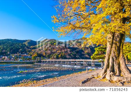 아라시야마의 단풍과도 케츠 교우 71856243