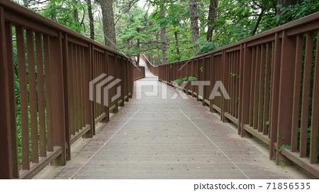 나무 산책길 71856535