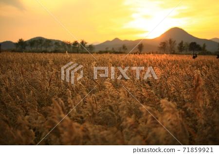 갈대밭풍경,가을,순천만습지 71859921