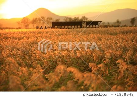 갈대밭풍경,가을,순천만습지 71859948