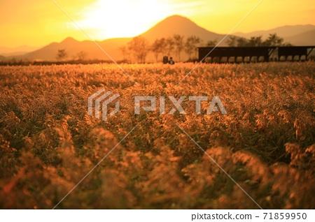 갈대밭풍경,가을,순천만습지 71859950