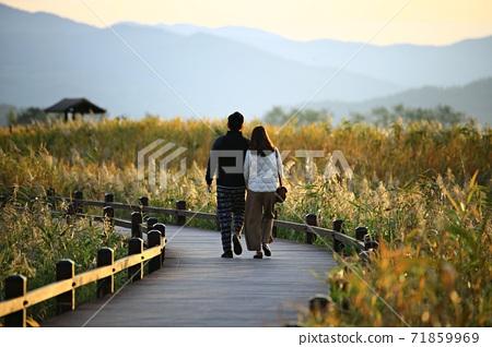 갈대밭풍경,가을,순천만습지 71859969