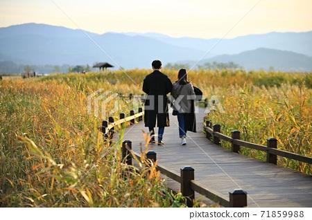 갈대밭풍경,가을,순천만습지 71859988