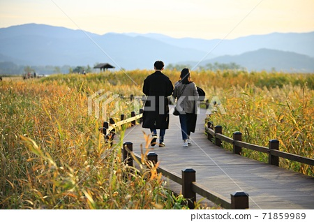 蘆葦場景觀,秋天,順天灣濕地 71859989