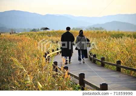 Reed Field Landscape, Autumn, Suncheon Bay Wetland 71859990