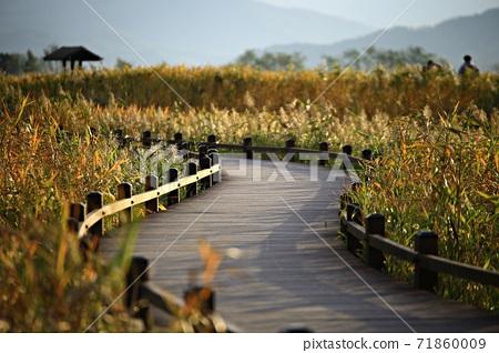갈대밭풍경,가을,순천만습지 71860009