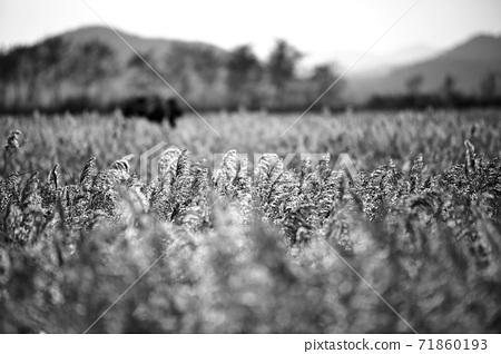 걷고싶은길,가을갈대밭 71860193