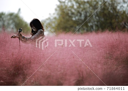Pink Mule Blooming Day! 71864011