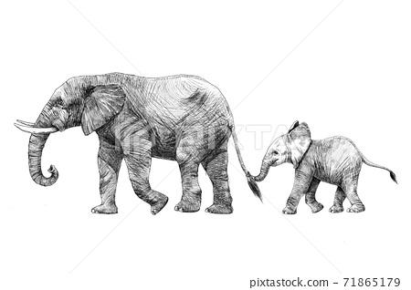 Beautiful stock pencil illustration with safari elephant family. 71865179
