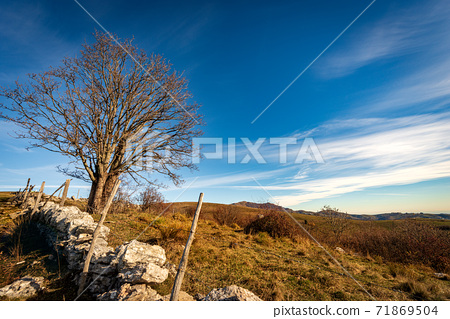 Bare Tree and Fence made of Stones - Lessinia Plateau Veneto Italy 71869504