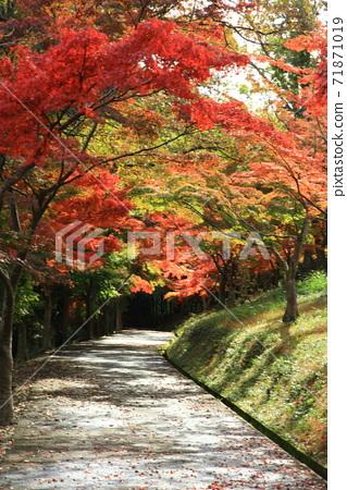 Diameter of autumn leaves 71871019