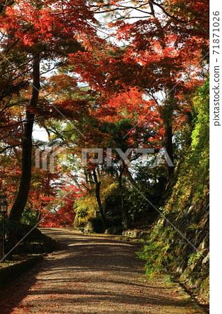 가을의 고성 71871026
